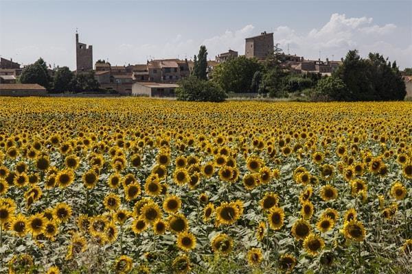 Mietwohnungen Girona