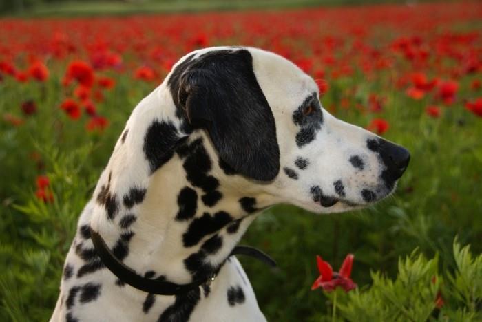 Appartamenti per le v acanze cani ammessi Costa Brava